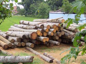 أخشاب جوز الهند