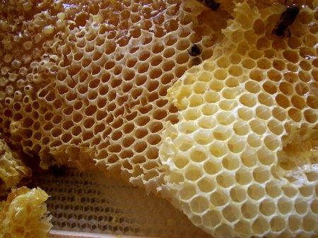 العسل d8b4d987d8af-d8a7d984d8b9d8b3d984.jpg?w=450&h=482