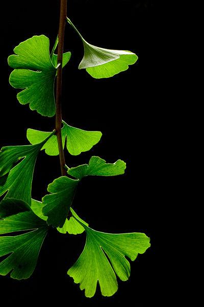 اعشاب طبيه ضروريه لصحتك D8a3d988d8b1d8a7d982-d8a7d984d8acd986d983d988