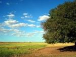 شجرة البطم D8acd8a7d986d8a8-d985d986-d8b4d8acd8b1d8a9-d8a8d8b7d985