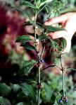 بعض النباتات البرية d986d8a8d8aad8a9-d8b9d8b1d982-d8b0d987d8a8.jpg?w=108&h=150